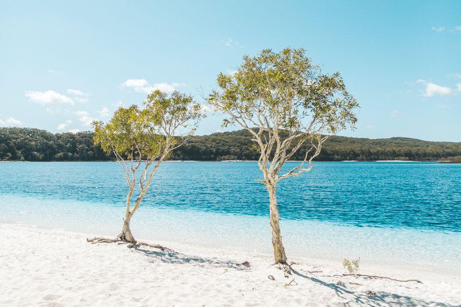 Lake McKenzie, Fraser Island double tree
