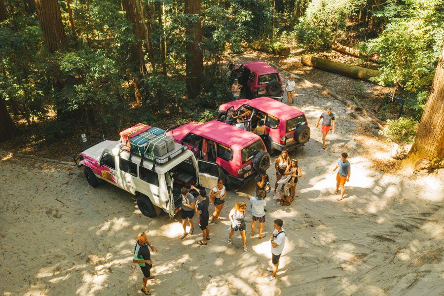 Fraser Dingo Tag-Along Tours, Fraser Island