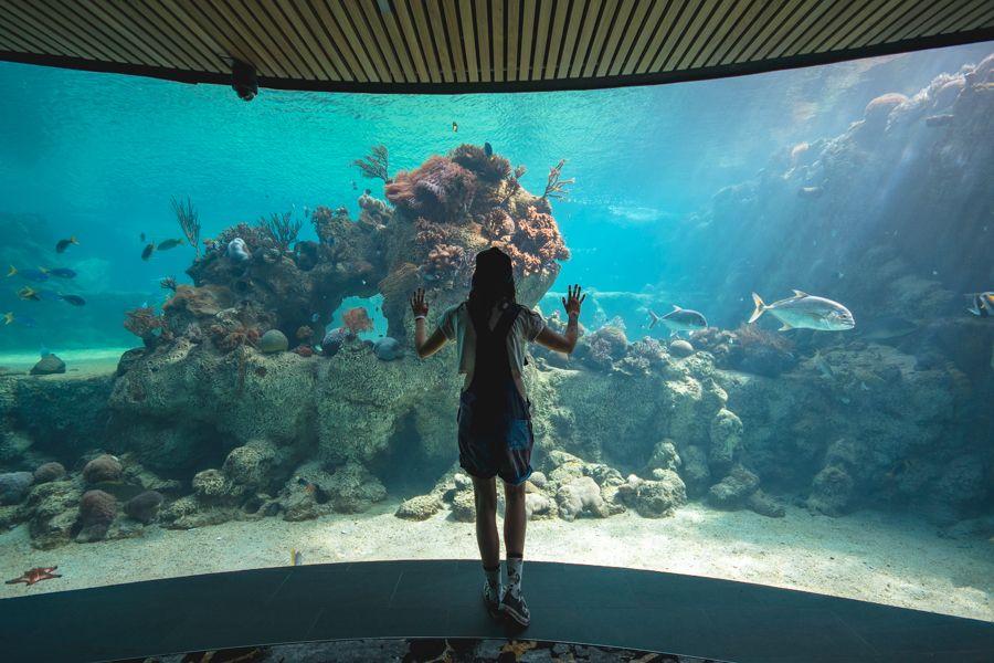 Living Reef, Daydream Island, Australia