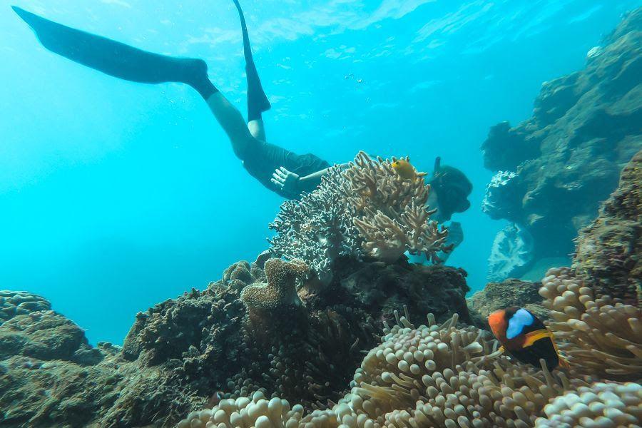 Snorkelling in the Whitsundays, Australia
