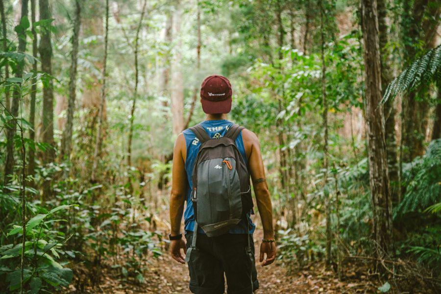 Lush, tropical canopies shading Chance Bay Track, daytime walk