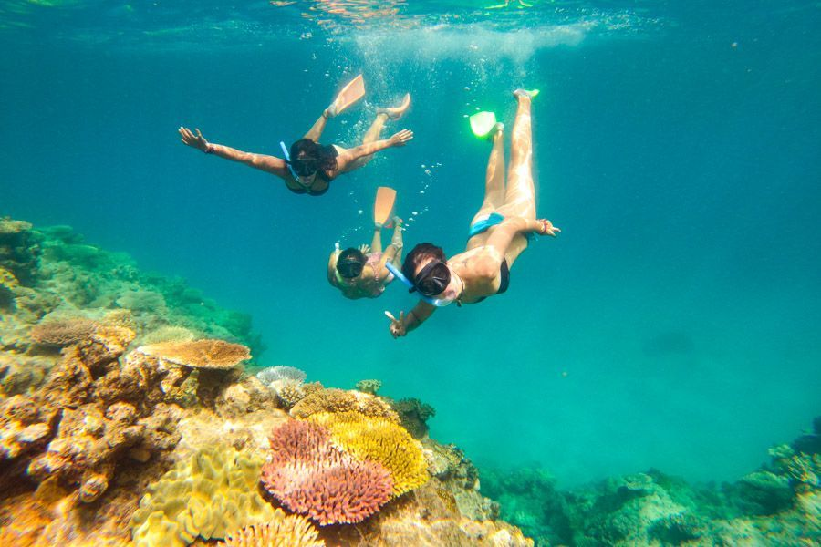 Snorkelling in the Great Barrier Reef, Stinger Season, Jellyfish Safety