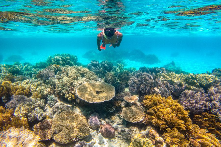 Snorkelling in the Great Barrier Reef, Whitsunday Islands