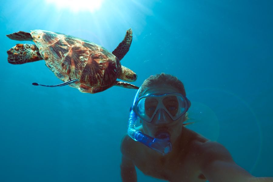 Green Sea Turtle in the Great Barrier Reef, snorkelling in the Whitsundays