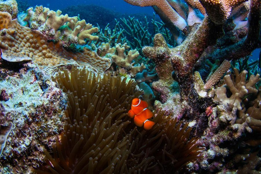 Reefworld CW Whitsunday Diving and Snorkelling
