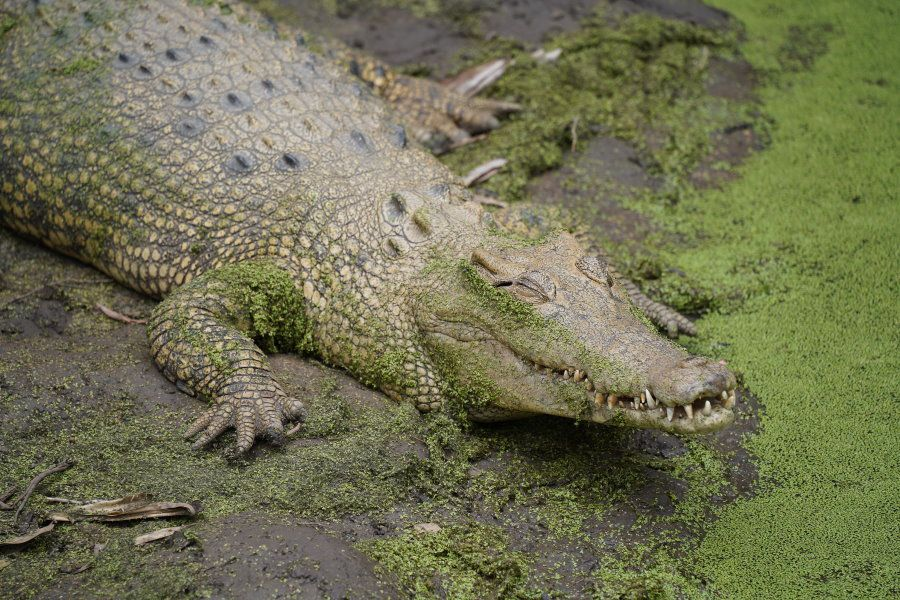 Are there Crocodiles in the Whitsundays