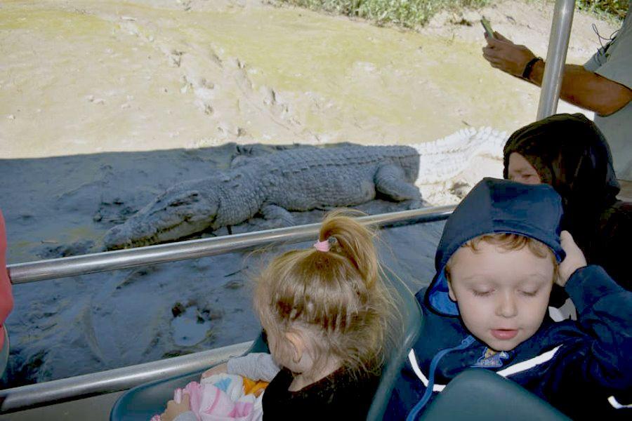 Whitsunday Crocodile Safari on the Proserpine River, Saltwater Crocodile