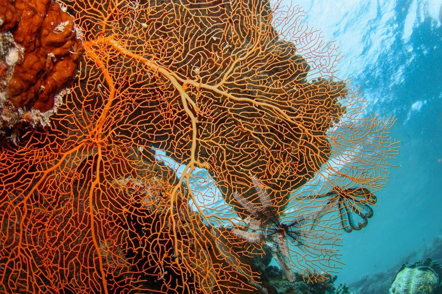 Cateran Bay Coral Snorkel the Great Barrier Reef in the Whitsunday Islands