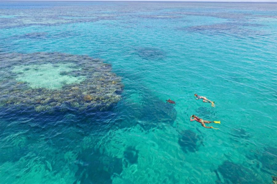 Blue Pearl Bay, snorkelling in the Whitsunday Islands, marine life