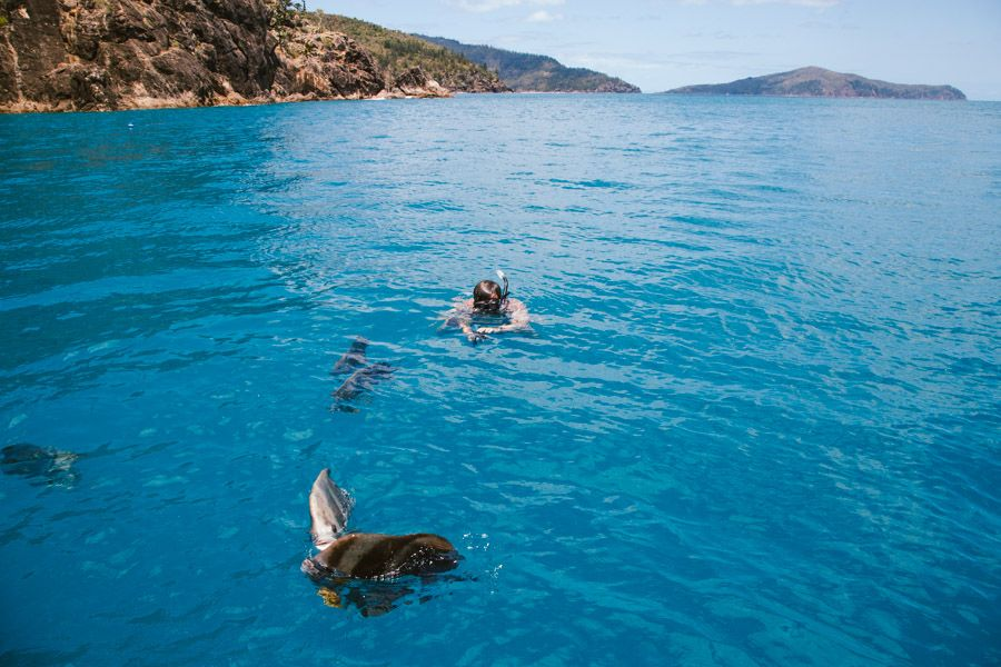 Mantaray Bay fish snorkelling Great Barrier Reef