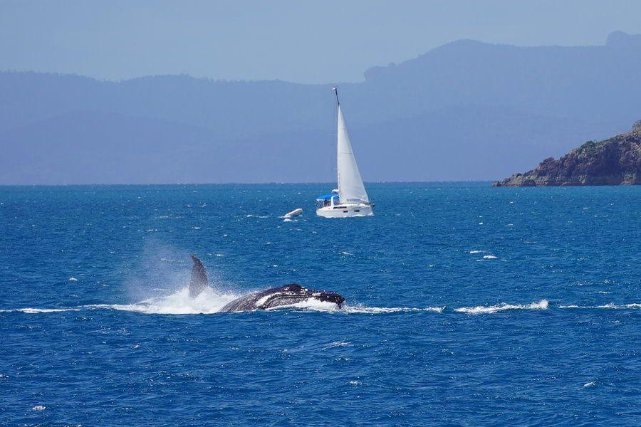 Airlie Beach Race week 2021 whales