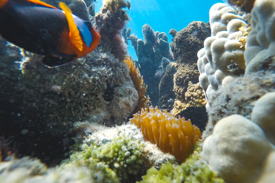 Great Barrier Reef World Heritage Site Corals and Fish