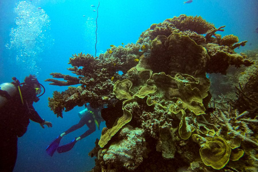Coral Great Barrier Reef World Wonder Heritage Listed Facts