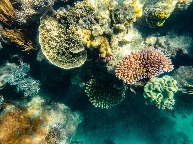 Great Barrier Reef Coral Reefs Whitsundays Animal Facts