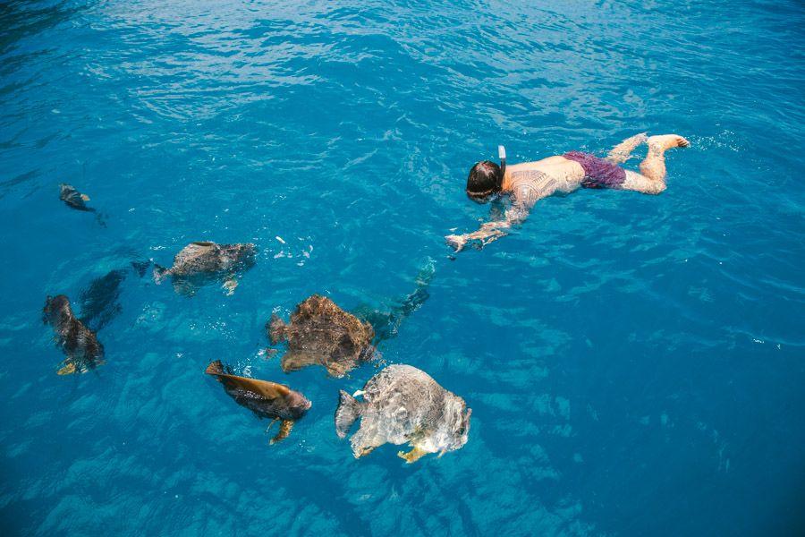 Great Barrier Reef Fish snorkel swim