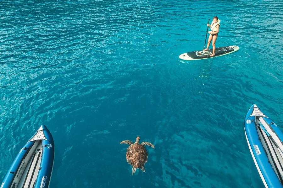 Turtle Great Barrier Reef snorkelling