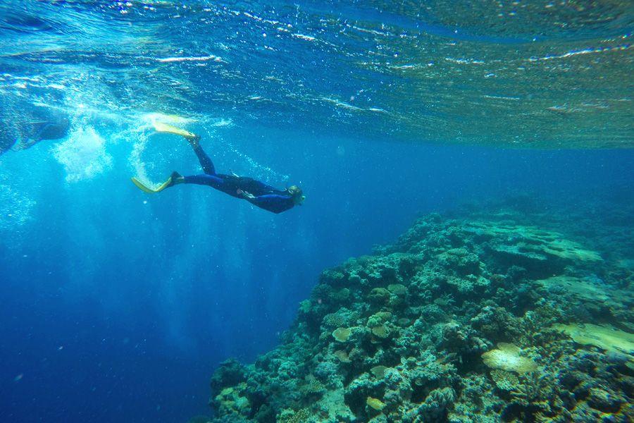 snorkelling whitsundays stinger suit