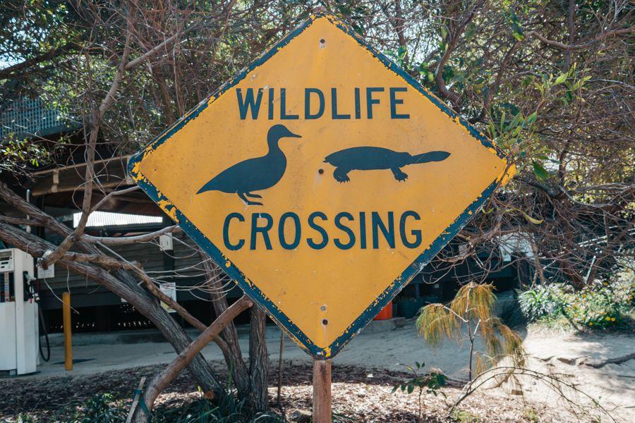 Wildlife Crossing Sign Australia